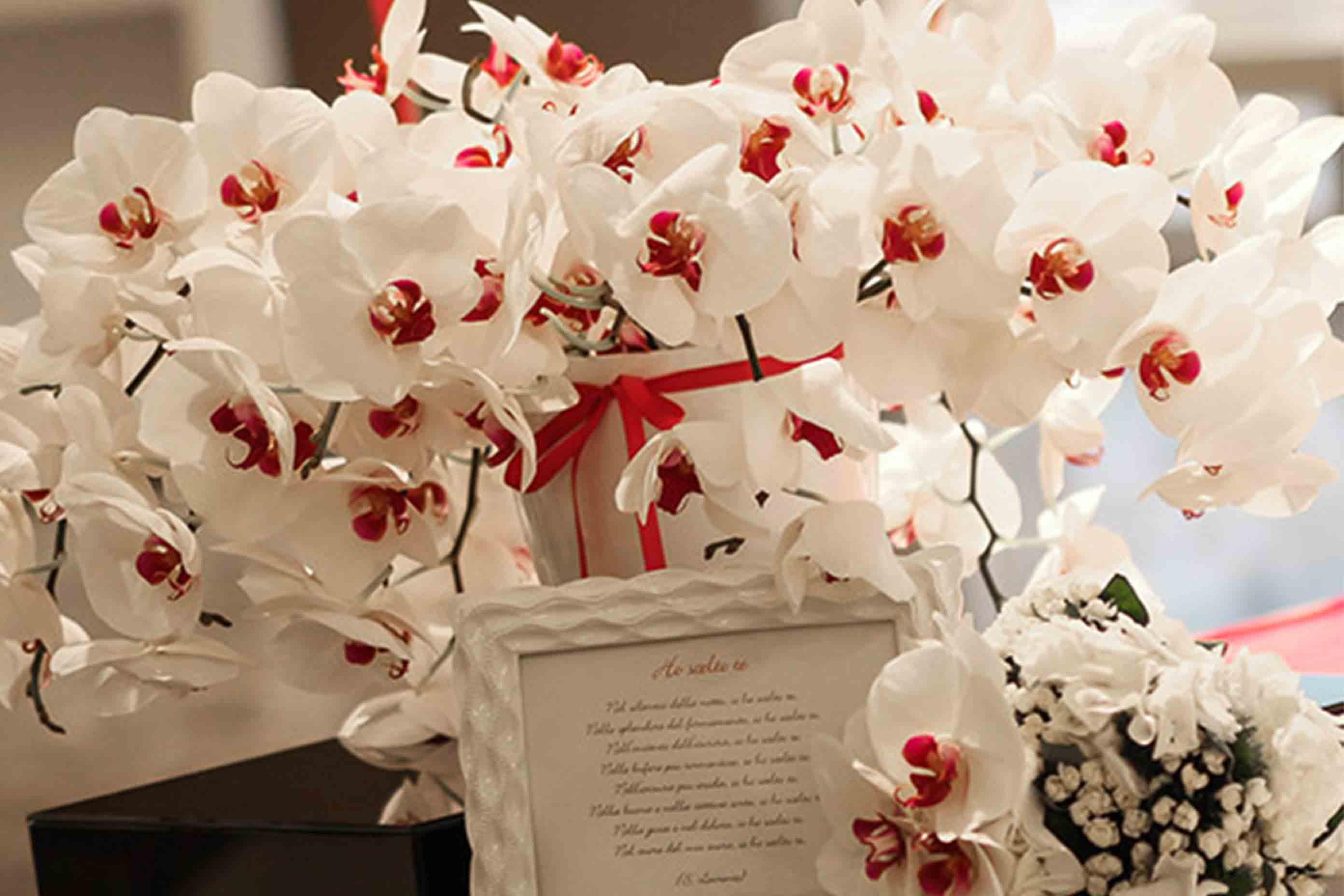 Matrimonio A Natale Idee : News
